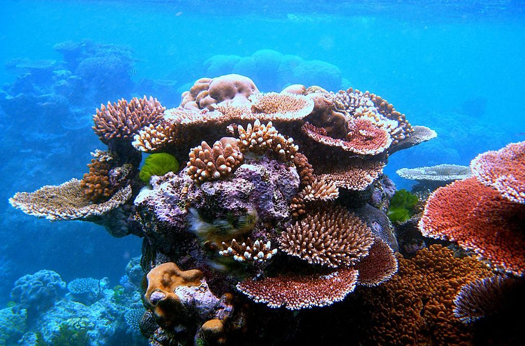 Hawaii Researchers Analyze DNA In Seawater To Determine Living Coral On Reefs