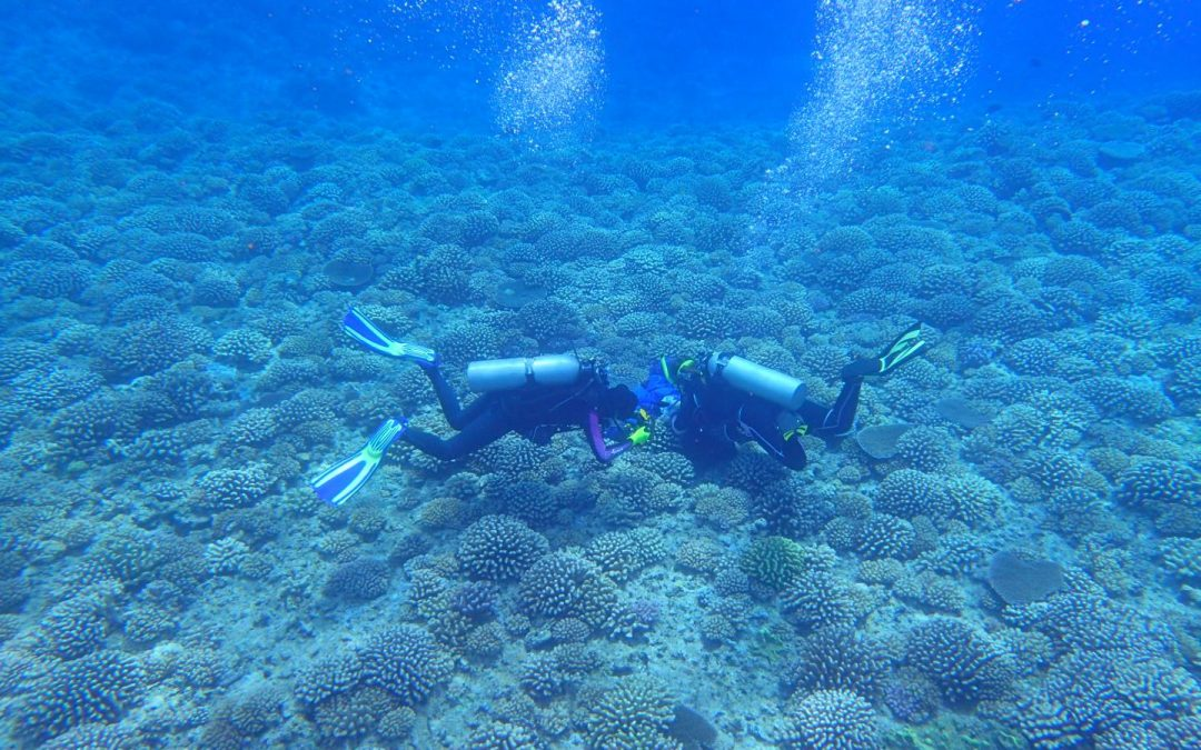 Global Effort To Reduce Global Warming Needed To Save World's Coral Reefs